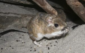 Rodent Control In Burlington County NJ