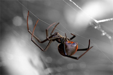 spidercontrol